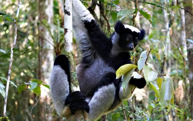 Magiškasis ir visiškai kitoks Madagaskaras
