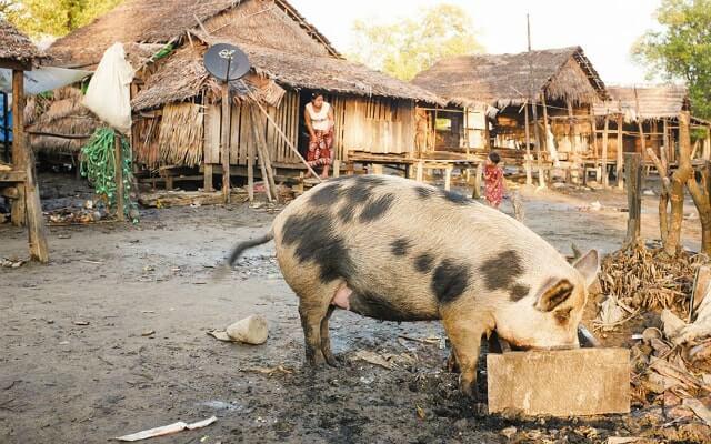 Kelione i Mianmara. Egzotines keliones