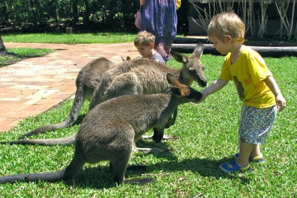 Kelione i Australija Santitravels